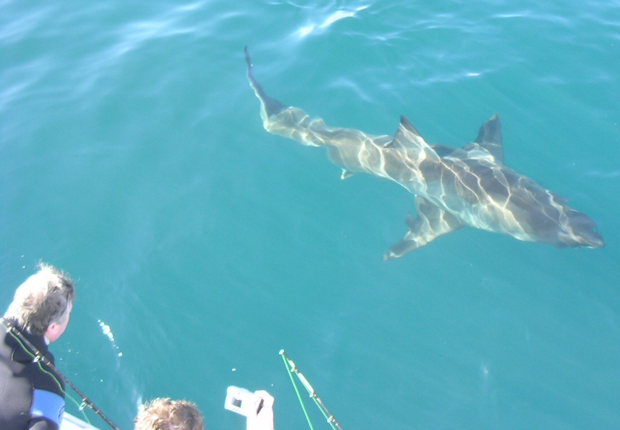 Your Say – Proposed  changes to Shark Cage Diving in SA