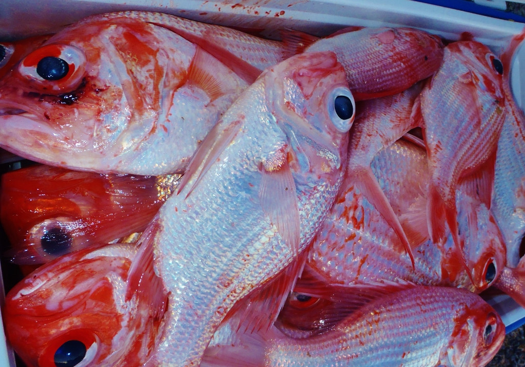 Recreational fishers on side to stop illegal Facebook fish sales