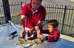 SA Recreational Fishing Grants Announced, as St Kilda's New Fish Cleaning Facility is opened!